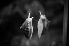 SnailianS