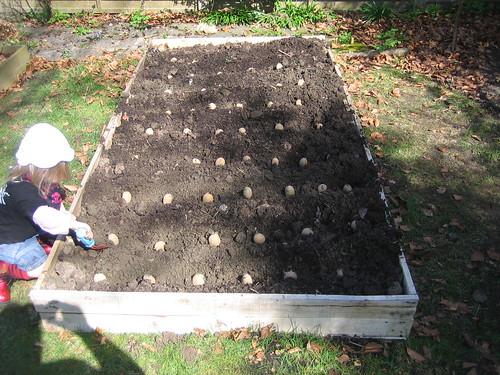 gardening042010 034