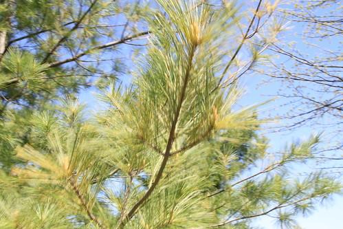Tree Branch 01