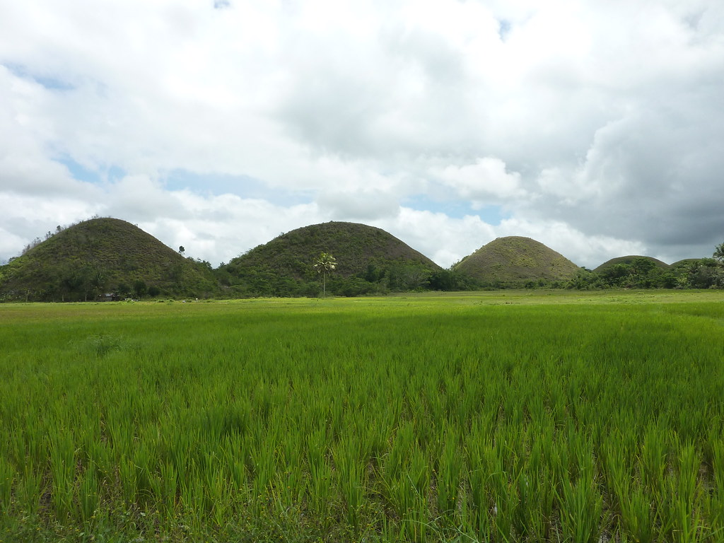 Bohol-Talibon-Chocolate Hills (45)
