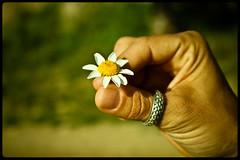 ¿¿Me quiere o no me quiere?? (InVa10) Tags: white flower blanco yellow canon eos spain hand fingers flor ring badajoz amarillo dedos mano malaga anillo extremadura inva 450d