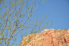 Spring in Zion (Jenn (ovaunda)) Tags: utah nikon springdale d90 18105mm jennovaunda ovaunda nikonnikkorafsdx18105mmf3556gedvr