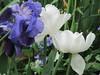 IMG_2938 (shame00) Tags: cadogangardens may2010 may12010