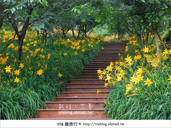 【台中休閒農場】2010金針花~新社沐心泉金針花4