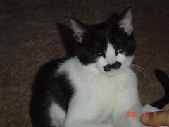 baby mr mustache