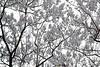8 - 3 mai 2010 Paris Square Maurice Kriegel-Valrimont  Glycines (melina1965) Tags: trees paris tree gardens garden spring nikon îledefrance visualarts may jardin mai arbres 75018 arbre printemps jardins wisteria 2010 smörgåsbord godislove glycine glycines d80 wisterias 18èmearrondissement deuséamor photoscape thisphotorocks umbralaward norulesphoto nopoolsweeperneeded theclassact