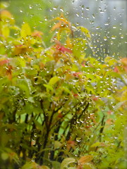 Another Rainy Day... (lynn.h.armstrong) Tags: camera red brown plant ontario canada tree green art window nature wet rain lens geotagged outdoors photography landscapes photo drops long flickr shot photos sony south country cybershot lynn h raindrops armstrong dsc stormont cyber gettyimages sault flickrcom ingleside superzoom attributionnoderivs redbubble redbubblecom ccbynd hx1 dschx1 lynnharmstrong requesttolicense requesttolicence