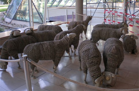 04_sheep05