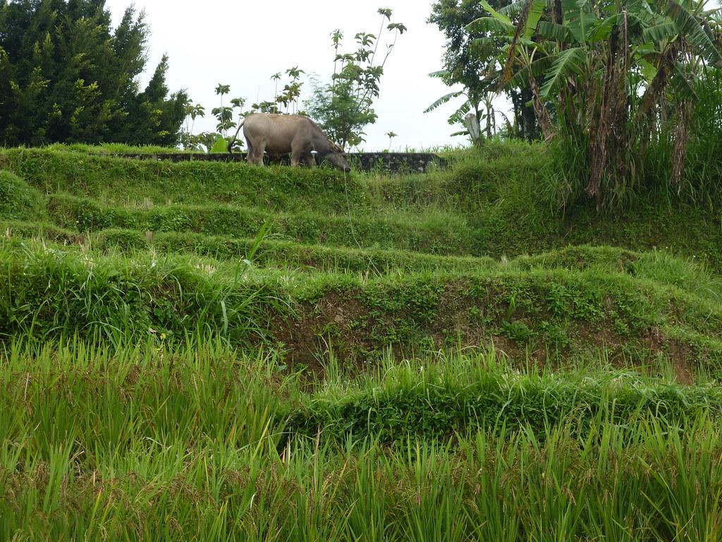 Sumatra-Lac Maninjau (162)