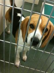 Cooper from Humane Society for Southwest Washington