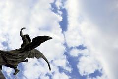 un angel cay del cielo..... (Adridri) Tags: amigos argentina angel buenosaires angeles cementerio safari recoleta estatua cada