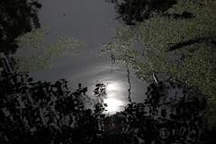 The Great Black Swamp (iofdi) Tags: sun sunlight white black reflection green water canon ripple swamp blackwater duckweed 50d 24105f4l mageemarsh waterlentils asthecameraseesit itreallyisblack