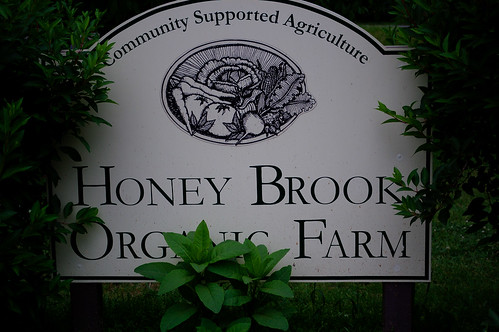 Strawberry picking at the Honey Brook Organic Farm, 4633171411 2044f07a61