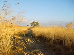 Bru (RPedro2010) Tags: fronteira planaltomirandes mogadouro parquenaturaldodourointernacional