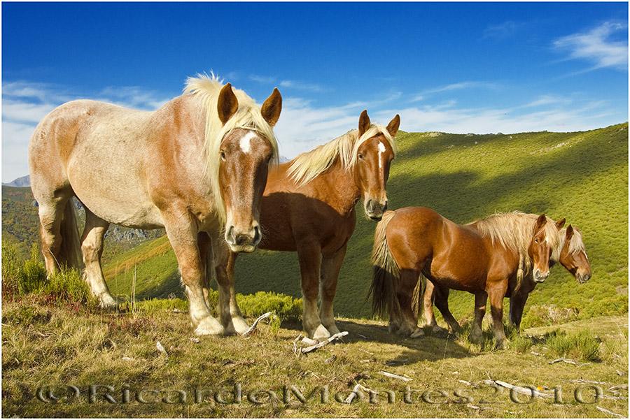 Los caballos de Babia