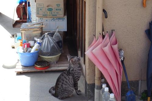 Today's Cat@2010-05-30