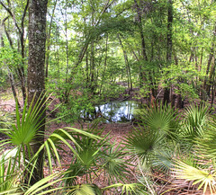 O'leno State Park 3 (Steven Berry) Tags: pictures statepark park travel trees usa tree nature water pool palms landscape photography us photo nikon unitedstates state florida photos united may picture southern swamp waters states 2009 hdr d3 stateparks swampy oleno nikond3 photocontesttnc10