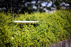 Support (andersdenkend) Tags: nature metal bar concrete support shiny bokeh depthoffield hedge leafs gree nikkor50mmf12 nikond700