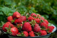 Strawberries () Tags: fruits strawberries