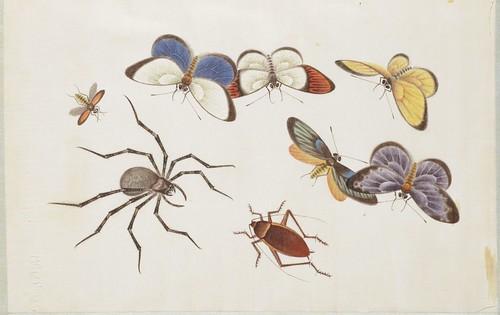 Butterfly Album j