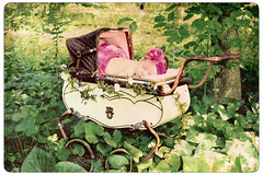 ~Baby Ava~ (Suzanne Pyle Photography) Tags: new baby vintage infant child carriage buggy suzannemarie suzannepyle
