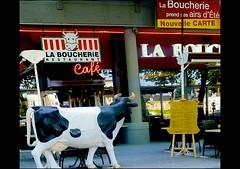A costumer on weight ! - une cliente de poids ! (Pendore) Tags: reflections restaurant cow terrace terrasse reflets shopwindows vache vitrine laboucherie butchersrestaurant