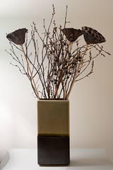 Dried Lotus Seed Heads in a Vase (the_amanda) Tags: lotus seed heads vase dried twigs day283 project365