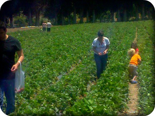 Strawberry Picking Summer 2010