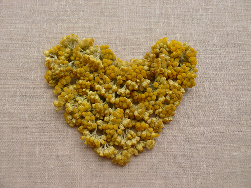 immortelle heart