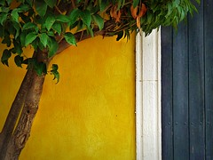 yellow space (msdonnalee) Tags: greenleaves tree muro leaves wall pared gate mura minimalism minimalismo mur minimalist parede mauer yellowwall lessismore  minimalisme abstractreality laureltree minimalismus   mexicanwall  mininalisme