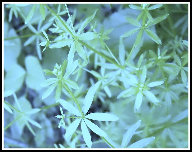 Star Green 2