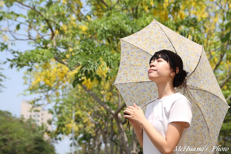 仲夏.黃金雨