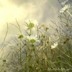 SUMMER MAGIC. (Edward Dullard Photography. Kilkenny, Ireland.) Tags: summer nature meadow eire magical photoart emeraldisle irlanda ierland infinestyle saariysqualitypictures amomenttotreasurenet edwarddullardphotographykilkennyireland