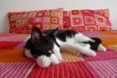 M de Manta e Manu II (Mi Mitrika) Tags: home handmade rosa manu manta l quadrados almofadas