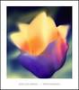 Extasis (Jose Luis Mieza Photography) Tags: flowers flores flower fleur fleurs flor benquerencia florews reinante jlmieza reinanteelpintordefuego joseluismieza