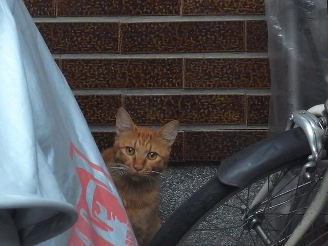 Today's Cat@2010-10-13