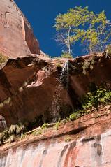 Small Waterfall (davidnc82) Tags: trip travel vacation usa southwest nature water landscape utah waterfall nikon zion zionnationalpark emeraldpoolstrail d90