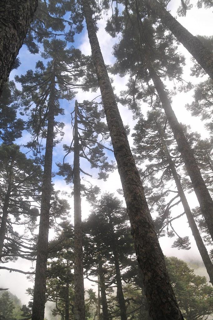 黑森林的藍天