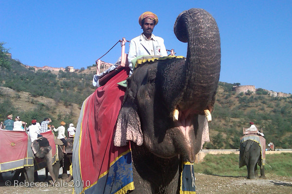 RYALE_Amber_Fort_Elephants_3