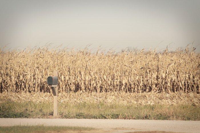 11-5-corn