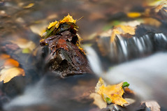miniature waterfall (skoeber) Tags: autumn fall nature water forest 50mm woods nikon stream wasser herbst natur bach wald eichberg d90 leisnig nikond90