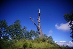 DSC07855 (rc90459) Tags: 最後的夫妻樹 夫妻樹 塔塔加 玉山