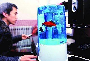 加湿器里的鱼