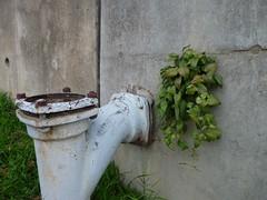 eliminated leaves ii