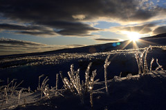 Fields of Cold (brackenb) Tags: sun snow southwales wales frozen chilly icicles blackmountain lowsun frozengrass wetknees breconbeaconsnationalpark lynyfanfawr coldknees forgotmyovertrousers veryverycoldknees goodjobididntsitdown coldfreezingwetkneeswetbumfrozenhandstiredlegsifthatmakesmeawimpthemimamonkeyswhatsit wimpiamnot