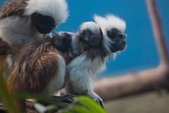 6509 (Arie van Tilborg) Tags: winter zoo blijdorp wintertuin dierentuin blijdorpzoo diergaarde rotterdamzoo estremità arievantilborg