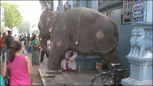 This temple elephant blesses visitors
