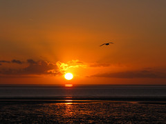 North Sea Sunset 2 (BlueRidgeKitties) Tags: winter sunset germany landscape deutschland december sonnenuntergang northsea landschaft nordsee schleswigholstein wattenmeer norddeutschland dithmarschen bsum waddensea northerngermany westkste buesum ccbyncsa nationalparkwattenmeer canonpowershotsx10is