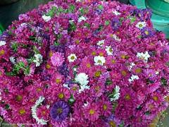 Mysore - Devaraja market (dietmut) Tags: travel flowers india tourism reisen asia journey karnataka mysore bloemen reizen azi federalstate panasoniclumix devarajamarket collagepink dmcfx500 dietmut deelstaat yourfavorites22 rozepinkrosa