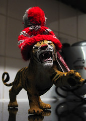 The Kettle King (Robeevans) Tags: hat canon toy tiger powershot knitted beannie sx10 sx10is canonpowershotsx10is